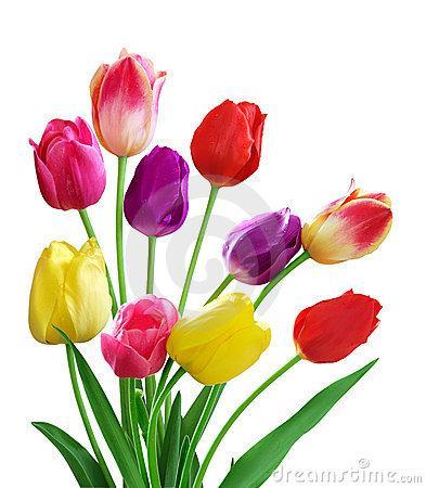 flores felicitaciones